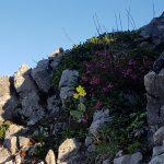 Flora und Fauna am Weg zum Schillerkopf
