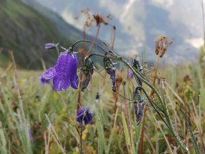 Die Pflanzenwelten überzeugen mit ihrer Blütenpracht.