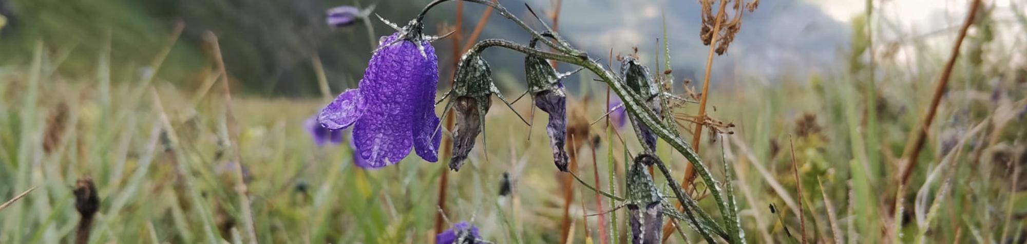 Pflanzenwelten im Brandnertal entdecken